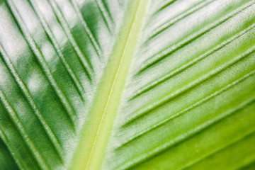 Close up of a green tropical plant leaf
