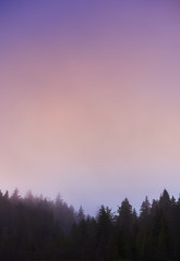 Pink sunset over a forest