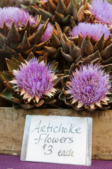 Box of blooming artichoke flowers with a price tag at a farmers market