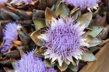 Closeup of blooming artichoke flowers in a wooden box at a farmers market