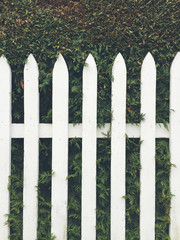 White picket fence in front of green hedge