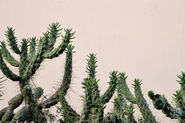 Cactus on the island