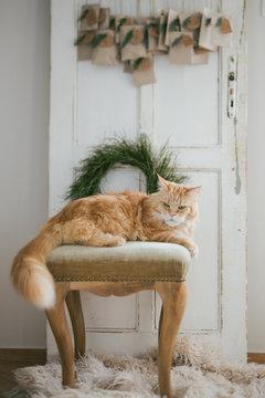 Natural advent calendar with a cat