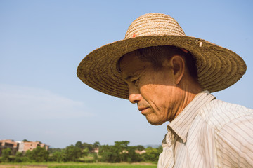 Farmers are harvesting rice
