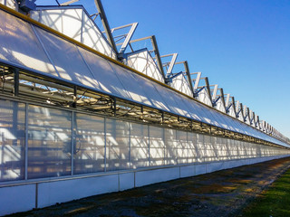 Row of Large Scale Industrial Greenhouse on Agricultural Farm Extending to Infinity