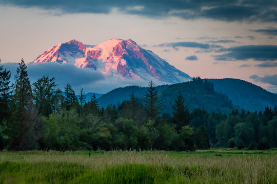 Mt. Ranier viewed from a meadow.