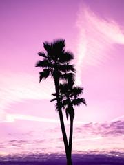 Printed kitchen splashbacks Purple Cotton candy tropical sunset