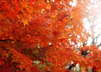 秋のイメージ:紅葉