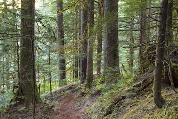Fraser Valley Rain Forest Landscape Background Trees Nature
