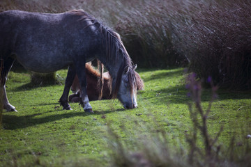 grass eating pony