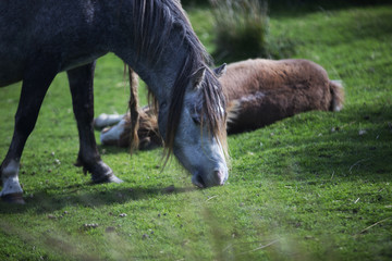 mother and child pony eating