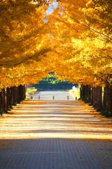 あづま総合運動公園のイチョウ並木(福島市)
