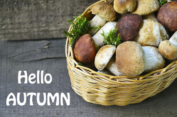 Hello Autumn.Boletus edulis mushrooms in a basket on old wooden background.Autumn Cep Mushrooms.White mushrooms.Selective focus.