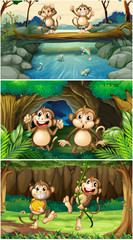 Three scenes with monkeys in forest