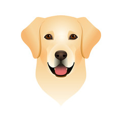 Isolated colorful head and face of happy labrador retriever on white background. Color flat cartoon breed dog portrait.