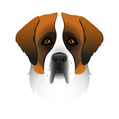 Isolated colorful head and face of saint bernard on white background. Line color flat cartoon breed dog portrait.