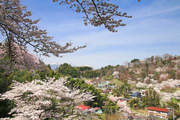 霞ヶ城公園(二本松市)