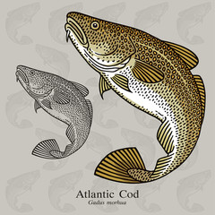 Atlantic Cod. Vector illustration for artwork in small sizes. Suitable for graphic and packaging design, educational examples, web, etc.