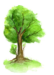 A green tree painted in watercolor on a white background