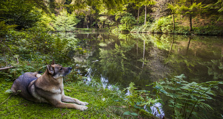 Forest lake  wildlife nature calm landscape scenery