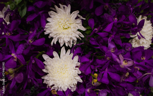 White flowers and purple leaves texture abstract background stock white flowers and purple leaves texture abstract background mightylinksfo