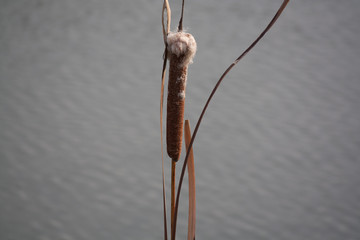 the upper part of the cane