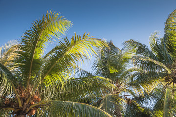 Palm tree leaves under blue sky background