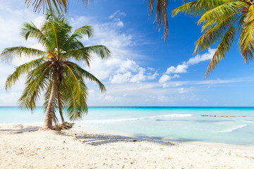 Coconut palm trees grow on white sandy beach