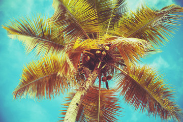 Coconut palm tree leaves under bright sky