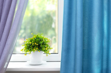 Beautiful view of houseplant on windowsill and curtains
