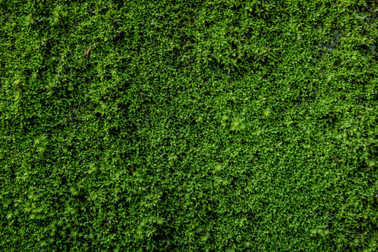 Moss green on the wall surface. Space for text on right