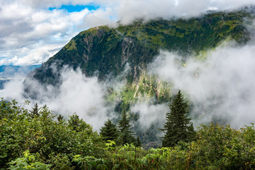 View down into the mountain valley with forest plants and evergreen