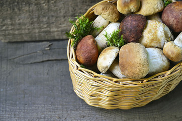 Boletus edulis mushrooms in a basket on old wooden background.Autumn Cep Mushrooms.Porcini mushrooms.White mushrooms.Selective focus.