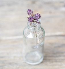Dry Thyme medical herb flower in glass bottle on wooden rural background