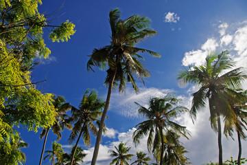 Palmen am Strand Ost Afrikars