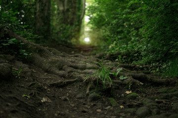 The root of a path