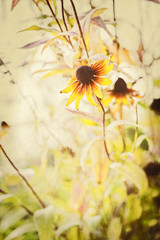 Macro Textured Floral Background with Coneflower in Garden