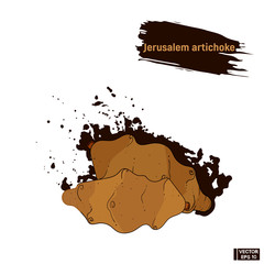Vegetable colored sketch, Jerusalem artichoke.