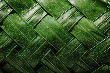 Close-up of woven leaf