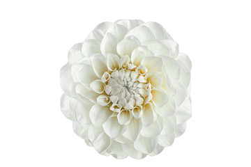 Keuken foto achterwand Dahlia white dahlia flower on a white background