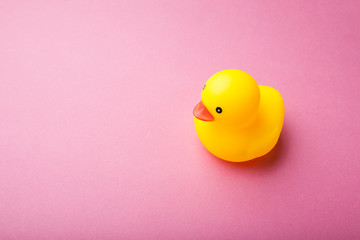 Yellow duckling on a pink background, space for text.