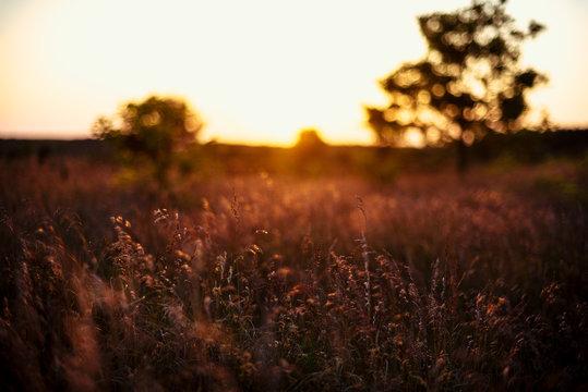 Grass in sunset light