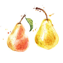 Pears fruits, watercolor painting on white background
