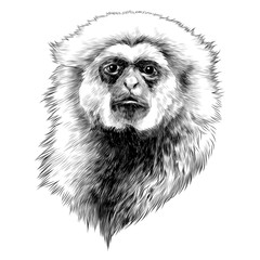 Gibbon monkey sketch vector graphics head monochrome black-and-white drawing
