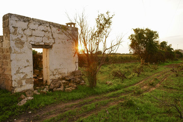 Old ruined house at sunset with pomegranate tree