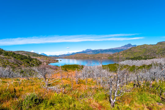 Forest in Torres del Paine National Park in Autumn, Patagonia, Chile
