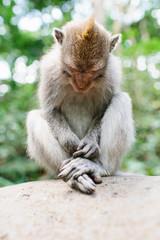 sitting monkey looking down