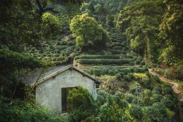 Tea fields above Longjing Village