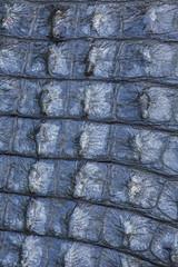 Close-up of alligator skin
