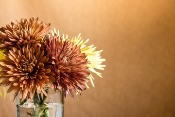 Bunch of autumn mums in front of a muted orange/brown backdrop.